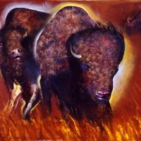 Buffalo-11