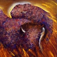 Buffalo-4